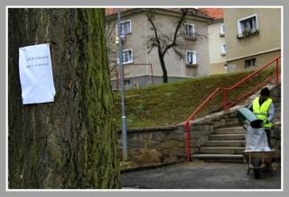 07-04-2012_ten_strom_s_tema_hrebikama_se_jmenuje_gingo_biloba_a_je_vzacnej_