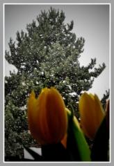 08-04-2012_kdyz_se_zima_nechce_vzdat